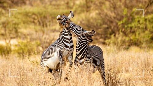 photographing on safari