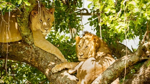 Photographing wild animals