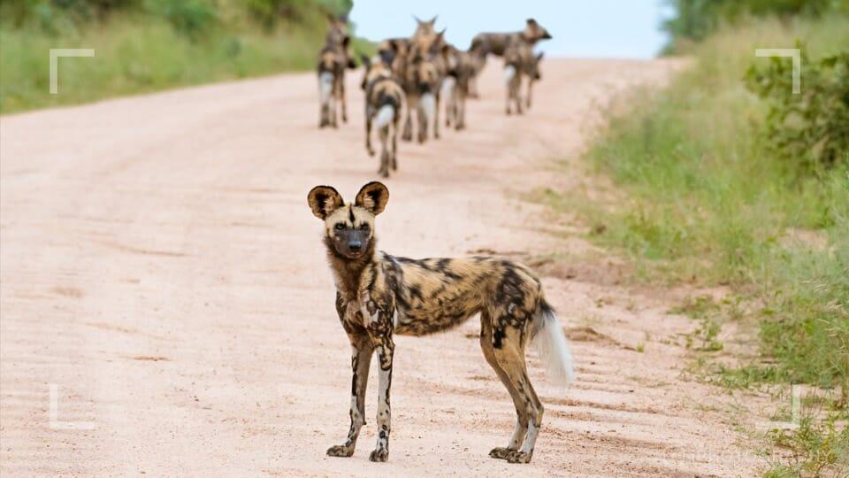 photographing safari animals